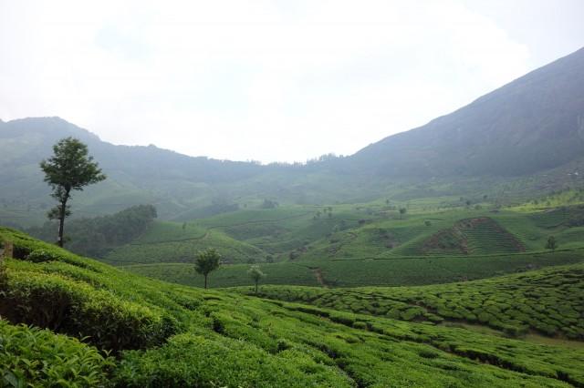 高原に広がる緑の絨毯