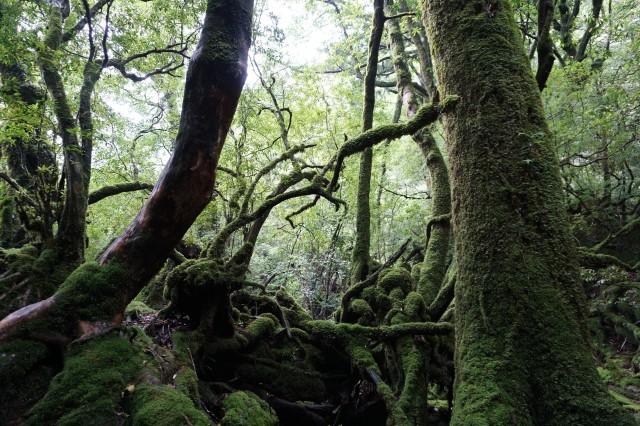 もののけの森(苔むす森)