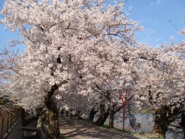 桜祭り会場 西門入り口付近