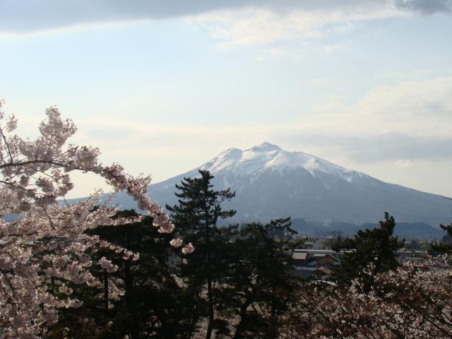 桜祭り2009 桜・松・岩木山