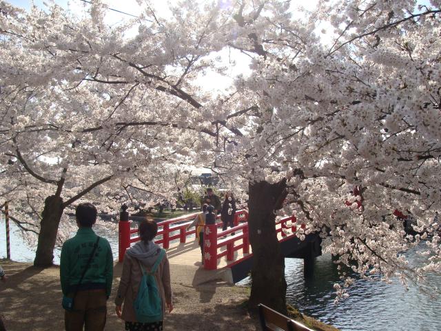 桜祭り2009 春陽橋