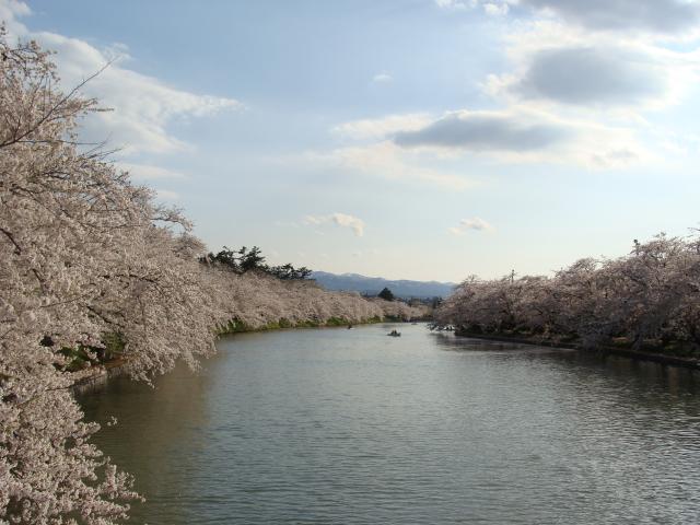 桜祭り2009 桜のトンネル